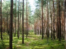 Miškas gera kaina